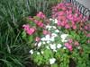 Ntakepinkflowers